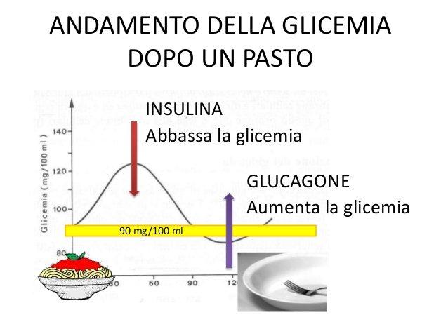 Funzionamento basilare del meccanismo di regolazione glucosio- insulina.