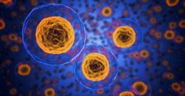 Cellule Pbay