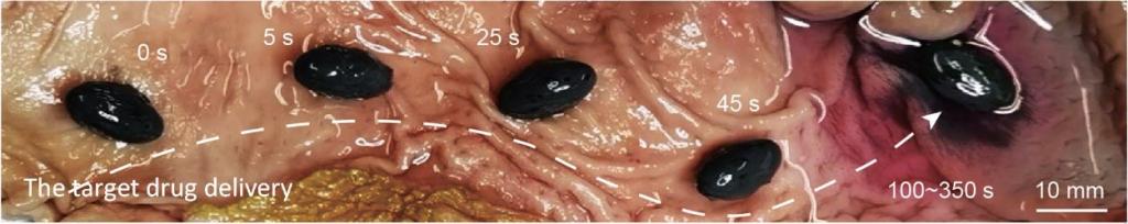 capsule target drug delivery M-spray stomach rabbit rilascio farmaci coniglio in-vivo test experiment