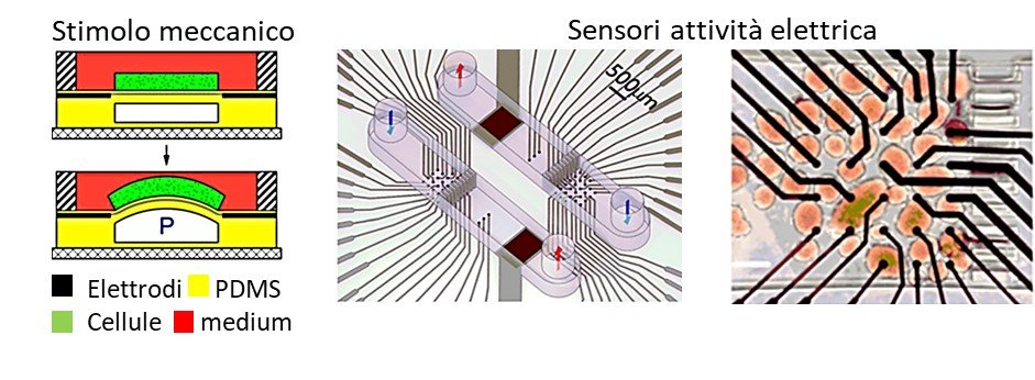 chip stimoli meccanici elettrici sensori stimoli meccanici