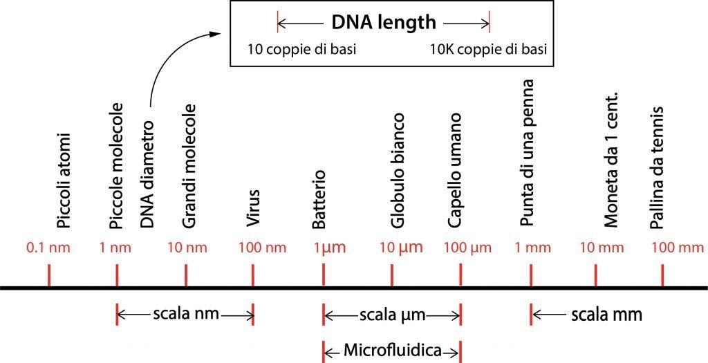 Scala dimensionale microfluidica