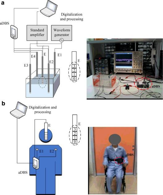 set up in vitro in vivo DBS