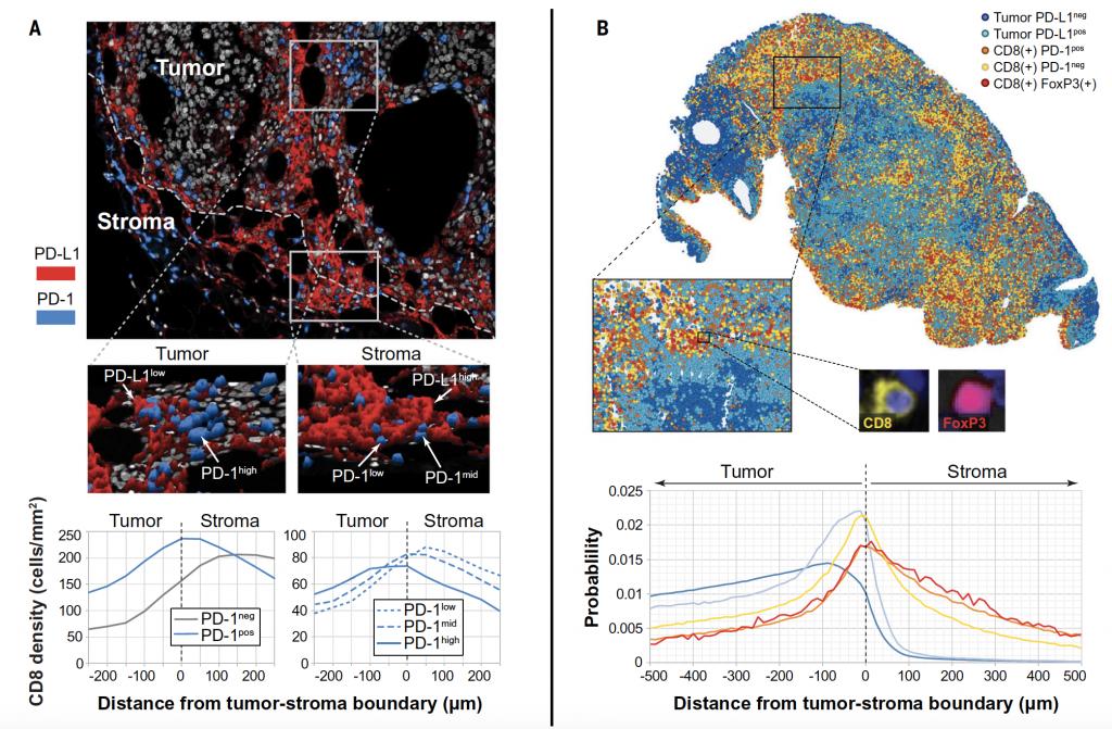 AstroPath distribuzione spaziale marker tumori