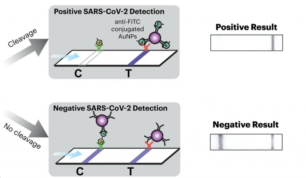test rilevamento SARS-CoV-2 COVID19 spike risultato test