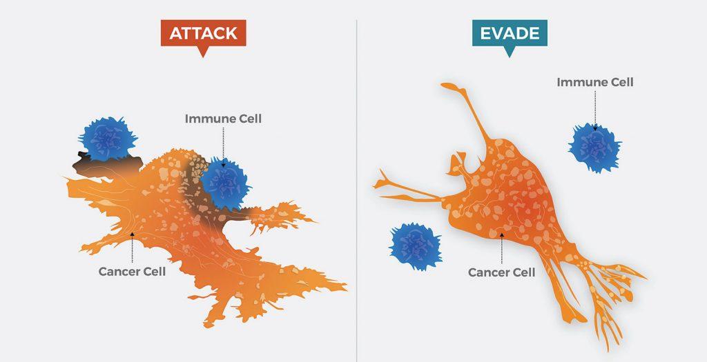 sistema immunitario cellule tumorali evasione